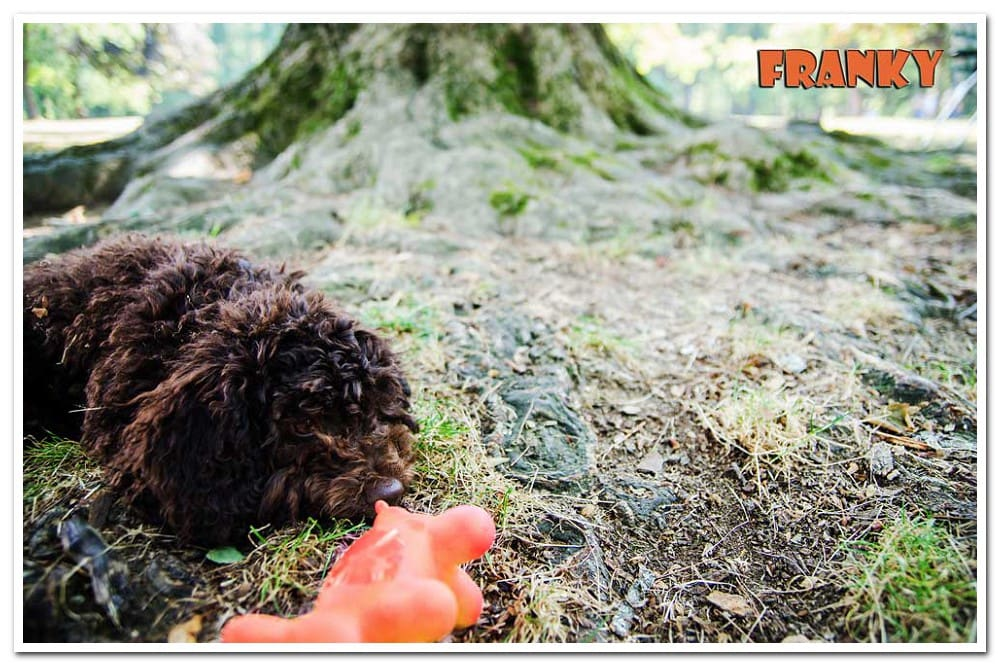 brown dog with orange toy