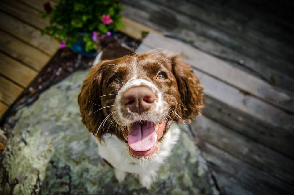 dog smiling face
