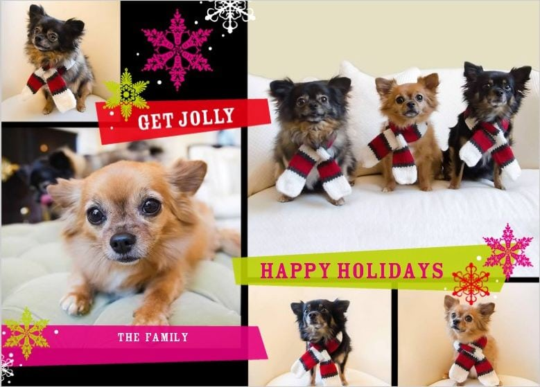 dogs with Christmas scarves