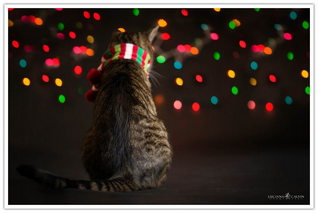 Cat looking backward with christmas lights on the background
