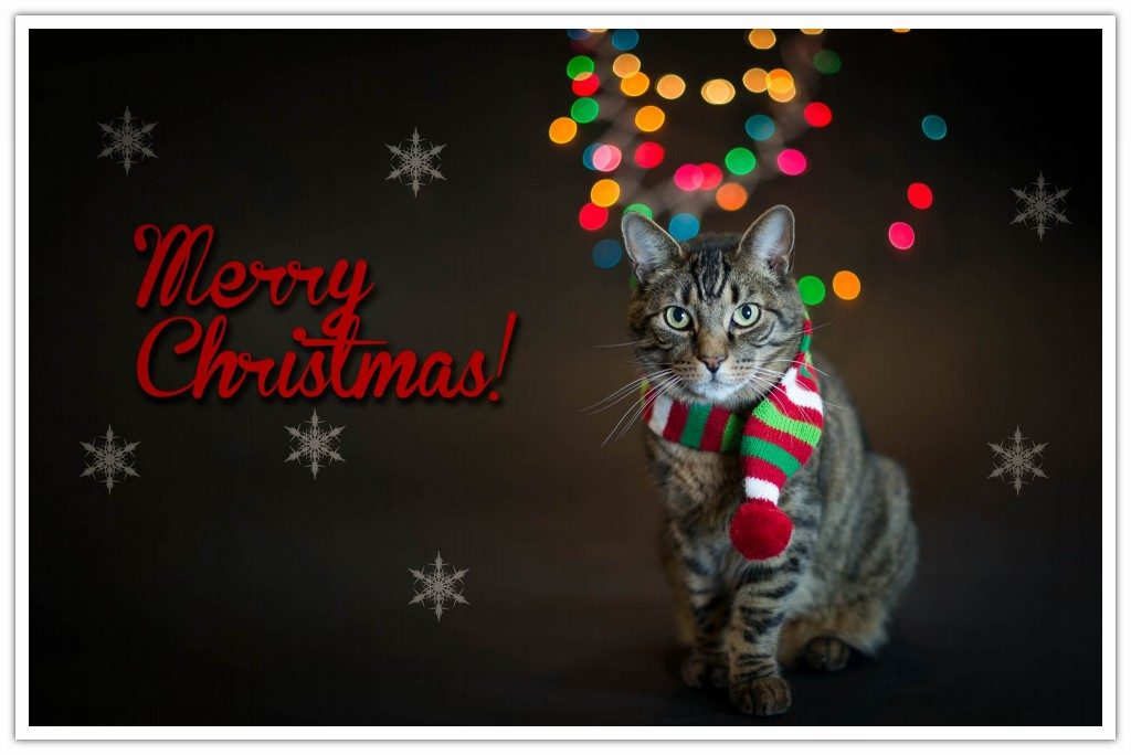 Cat with a scarf Christmas lights on the background