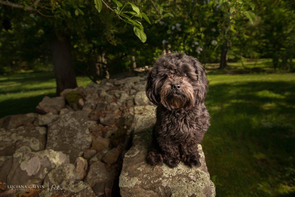 Chelmsford Pet Photographer
