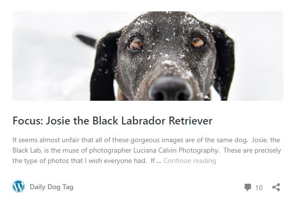 Daily Dog Tag Blog Feature | Chelmsford Pet Photographer