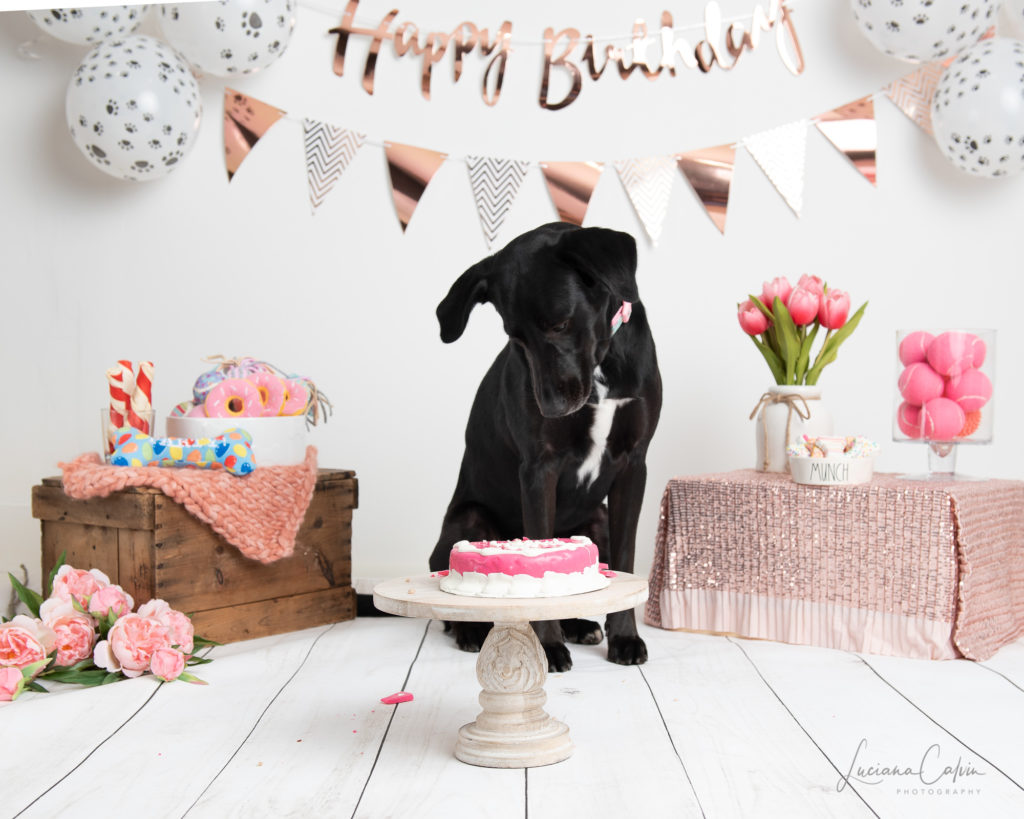 doggy looking to pink birthday cake