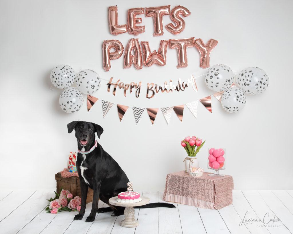 Chelmsford Dog birthday party photoshoot